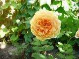 k-Bilderprobe Juli '09 018.jpg
