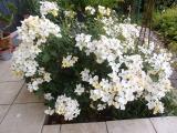 k-Kew Garden 20.06.17 033.JPG