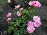 Mary Rose Juni 2011 (6).JPG