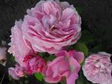 Mary Rose Juni 2011 (2).JPG