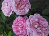 Mary Rose Juni 2011 (4).JPG