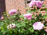 Mary Rose 2011.JPG