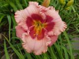 k-Cherry Valentine 11.06.18 059.jpg