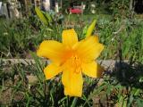 IMG_0212 Nachblüte.jpg