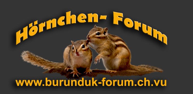 Banner Hörnchen- Forum