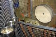 Bananenhörnchen.jpg