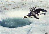 penguin-postcard.jpg