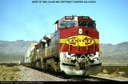 2649_1040308500 - Ibis, California, USA, 18.9.1995---805.jpg