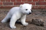 Eisbaer-Knut-.jpg