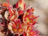 Virágzófa2.jpg