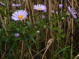 DSCF0611 - Harka 2010. 10. 02..JPG