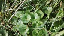 növény 1.jpg