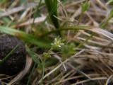 DSCF9610 - Fejeték 2011. 04. 17..JPG