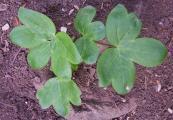Milyen növény_1.JPG