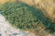növény08.jpg