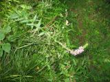 2011-08-18 15-01-01 146.jpg