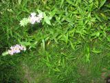 2011-08-18 15-02-22 148.jpg