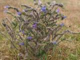 virág2.jpg