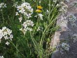 virág3.jpg