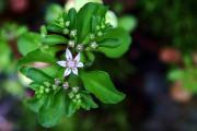 növény.jpg
