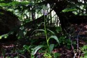 orchidea3.jpg
