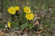 Tavaszi h�rics 1.  IMGP3851-um.jpg
