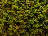 P1000959 - Kakas-hegy 2012. 01. 01..JPG