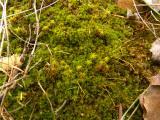 P1000941 - Kakas-hegy 2012. 01. 01..JPG