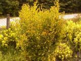 virágk-0333.jpg