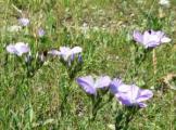 Lilás virágok.jpg