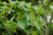 2016 05 18 sopron erdészeti botanikuskert 062.JPG