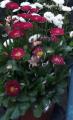 virág.png