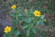 sárga01.jpg