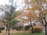 2012-11-15 11.12.57.jpg
