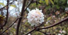 viráglabda.jpg