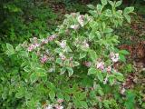 virág1.jpg