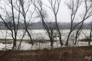 2013.03.31. Zala áradás 2.jpg