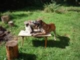 Hund und Katz 014.jpg