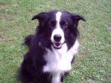 Hunde004.jpg