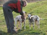 Herr_und_Hunde_4.JPG