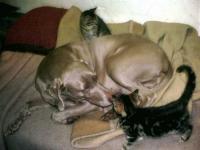 Katzenfamilie14