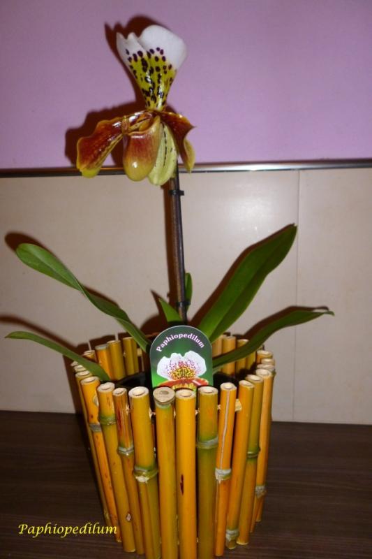 Orchideen-Neuzugang - Seite 39 F71t9383p431704n2_CiszendB