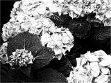 FotoSketcher - P7111352.JPG