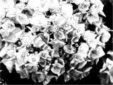 FotoSketcher - P7071063.JPG