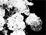 FotoSketcher - P7071069.JPG