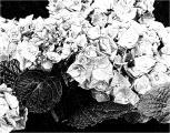FotoSketcher - P7111351.JPG
