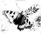 FotoSketcher - P7233059_stitch.jpg