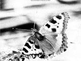 FotoSketcher - P7233068.JPG