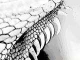 fany.over-blog.de krokodile echsen (24).jpg