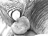 fany.over-blog.de krokodile echsen (16).jpg